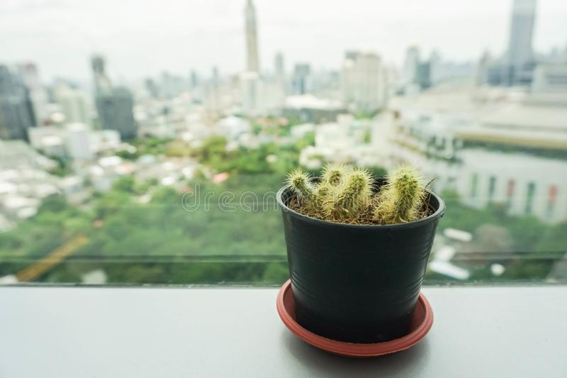Green cactus in small pot placed on office desk stock photography