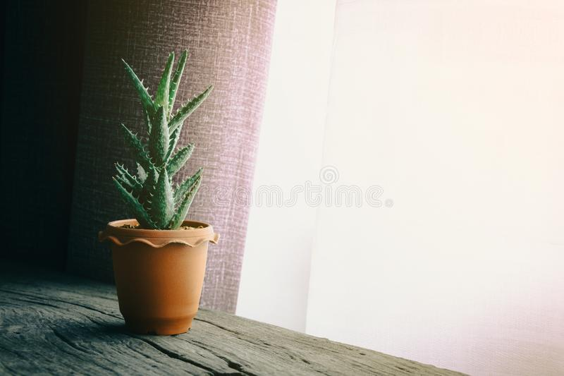 Green cactus on table. With dark style royalty free stock photos