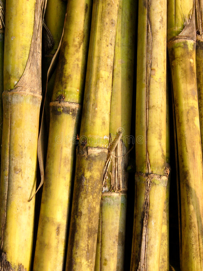 Download Green canes stock photo. Image of stalk, bamboo, yellow - 111296