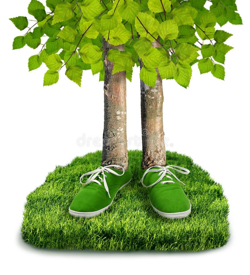 Green carbon footprint concept. Green carbon footprint environmental concept, trees with shoes isolated royalty free stock images