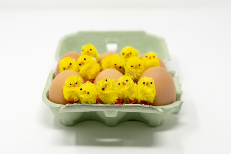 A green carton containing half a dozen eggs with 12 children`s fluffy toy chicks scattered on top stock photography