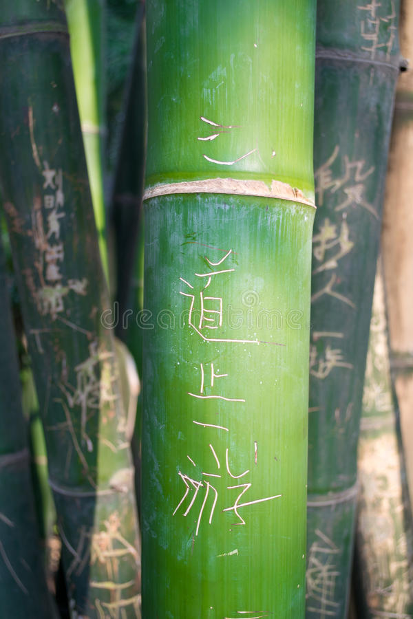 Green carved bamboo stock photos