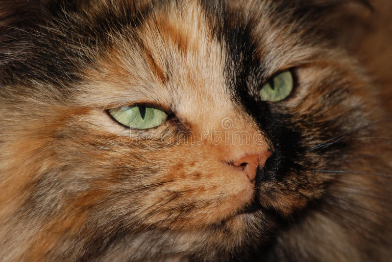 Download Green cat eyes stock image. Image of attention, green - 27171257