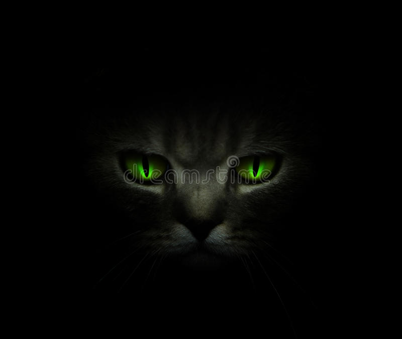 Download Green Cat's Eyes Glowing In The Dark Stock Photo - Image: 13426402