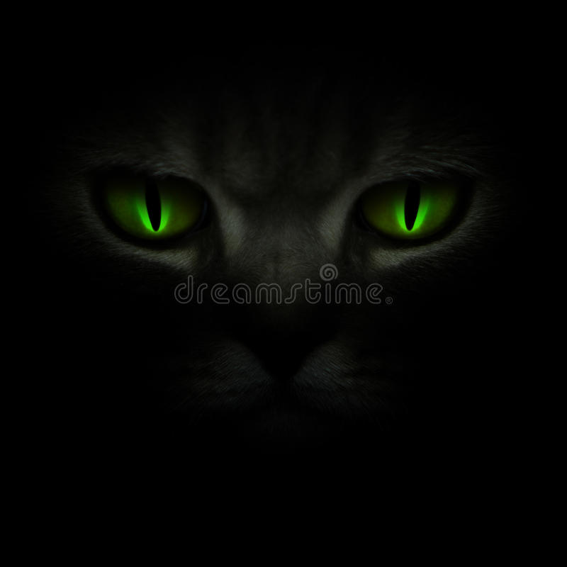 Download Green Cat's Eyes Glowing In The Dark Royalty Free Stock Image - Image: 13777956