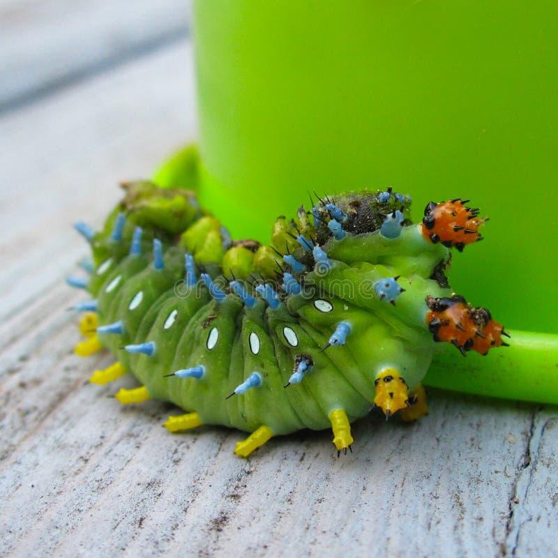 Green Catterpillar Free Public Domain Cc0 Image