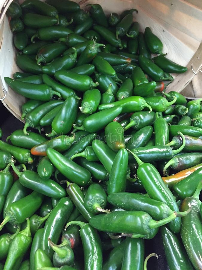 Green chili peppers stock photography