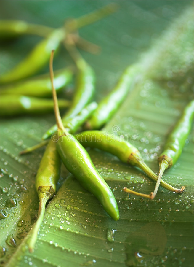 Green Chilis on leaf stock photography