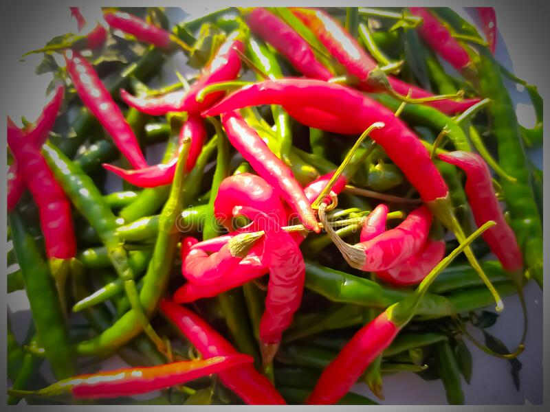 Green chillies and red chillies jpg royalty free stock image