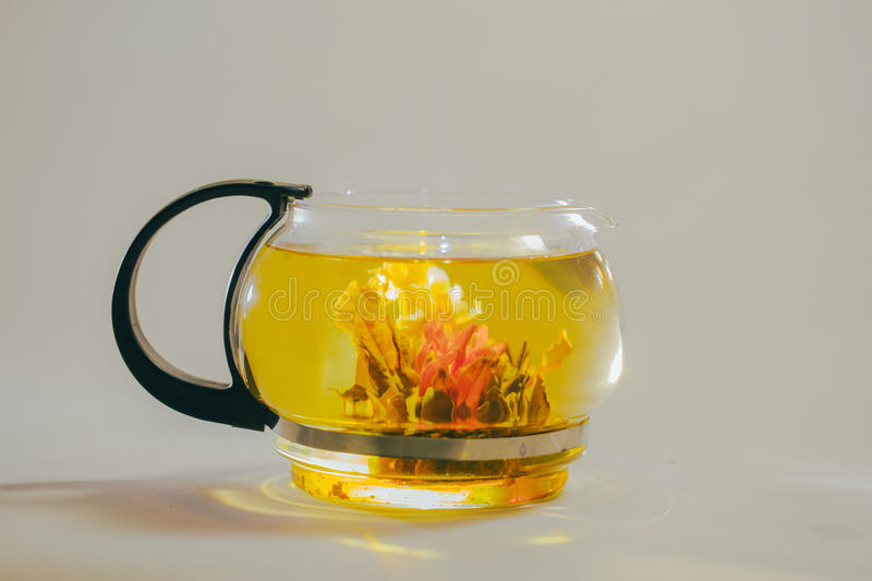 Green Chinese tea flower bud blooming in glass teapot. on white background. Green Chinese tea flower bud blooming in glass teapot stock images
