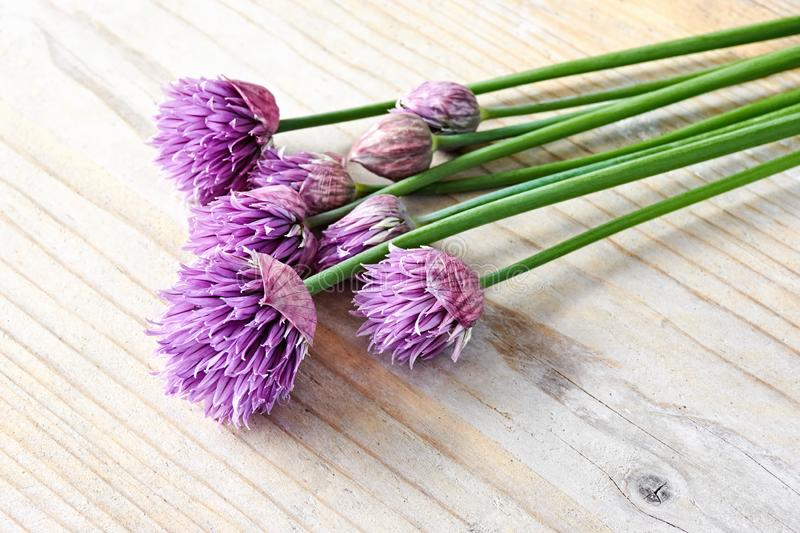 Green chives in bloom with purple flowers on wood stock images