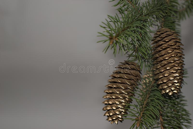 green christmas tree with golden pine cones on the branches stock