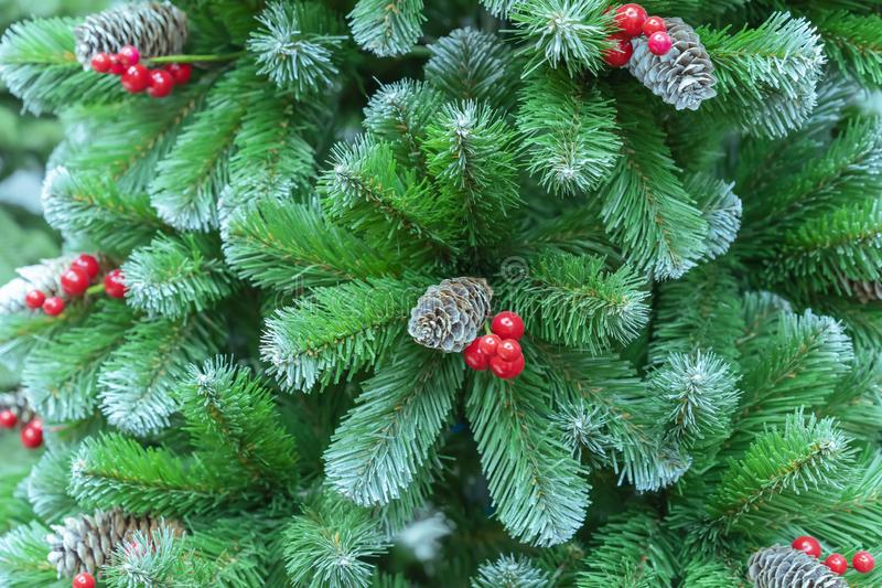 Red Berries Evergreen Tree Stock Images