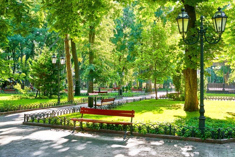 Green city park at summer season, bright sunlight and shadows, beautiful landscape stock photography