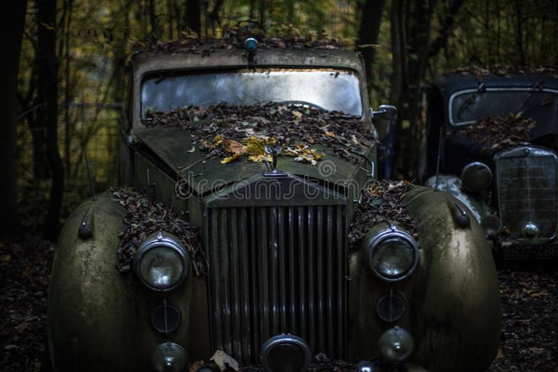 Green Classic Car in the Forest stock photography