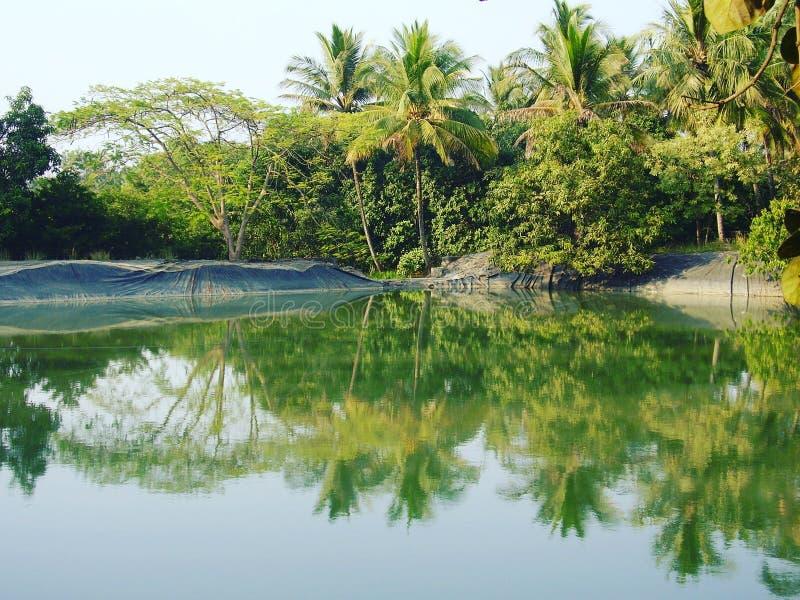 Green and clean lake at Dahanu royalty free stock image
