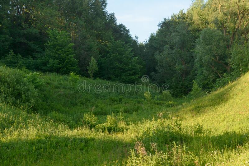 Green clearing in front of a forest. Green clearing in front of a dense forest stock photo
