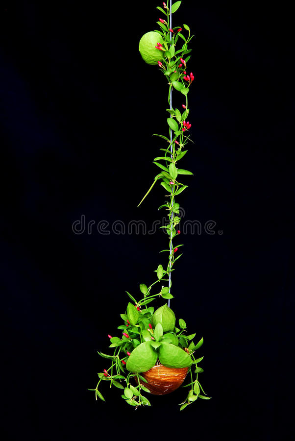 Free Green Climbing Plant With Little Red Flower Stock Photo - 25362030