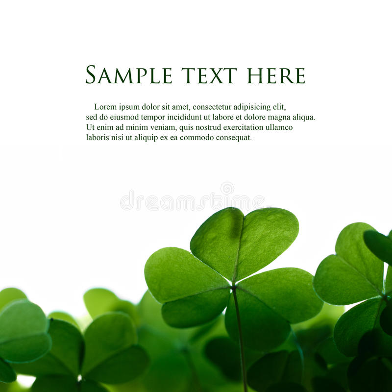 Green clover border. royalty free stock photography