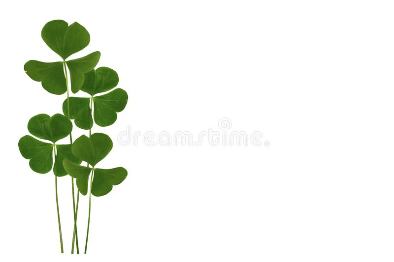 Green clover leaves isolated on white background. St.Patrick \'s Day. Nature stock photos