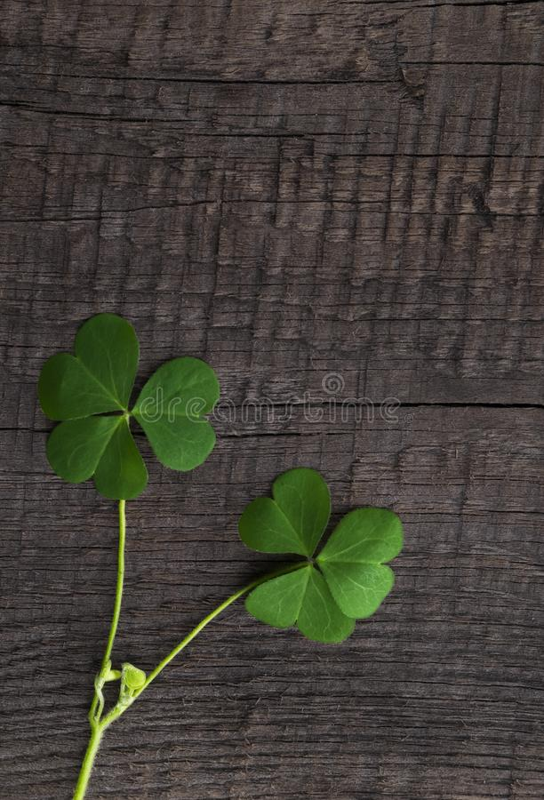 Green clover symbol of a St Patrick day on wooden background. Green clover symbol of a St Patrick day non wooden background royalty free stock photography