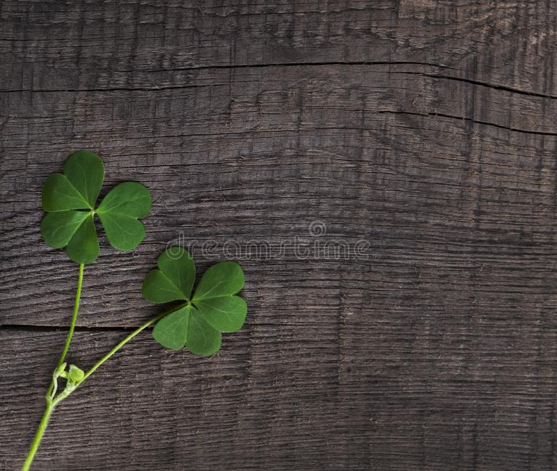 Green clover symbol of a St Patrick day on wooden background. Green clover symbol of a St Patrick day non wooden background stock photos