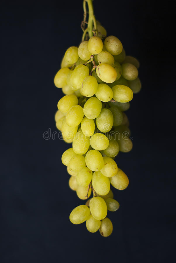 Green cluster of grapes royalty free stock photo