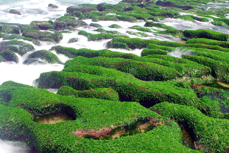 Download Green Coast stock photo. Image of seaweed, vacation, beauty - 15176104