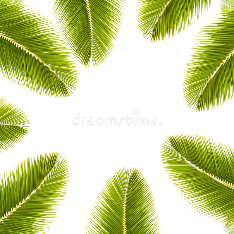 Green coconut leaf frame isolated on white background. stock photos