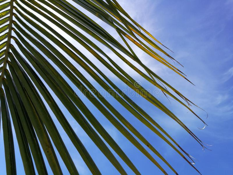 Green coconut palm frond against scenic skies and sun lights in the background, concept about summer time and relax stock images