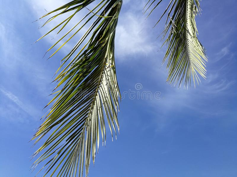 Green coconut palm frond against scenic skies and sun lights in the background, concept about summer time and relax stock image