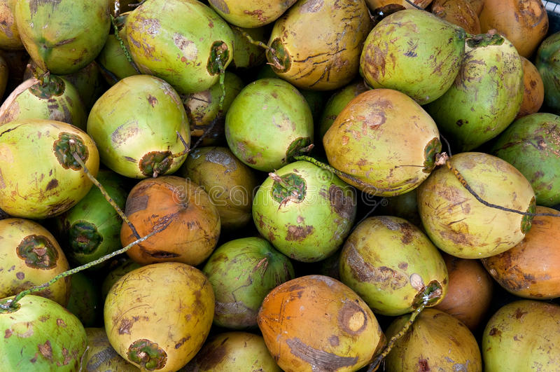 Download Green coconuts stock photo. Image of food, dieting, america - 13040890