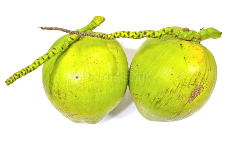 Download Green coconuts stock photo. Image of food, green, refreshment - 33945300