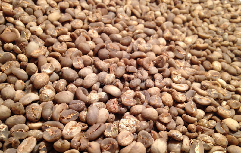 Download Green Coffee stock photo. Image of drink, texture, honduras - 38454210