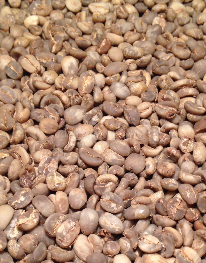 Download Green Coffee stock image. Image of process, green, sumatra - 38454359