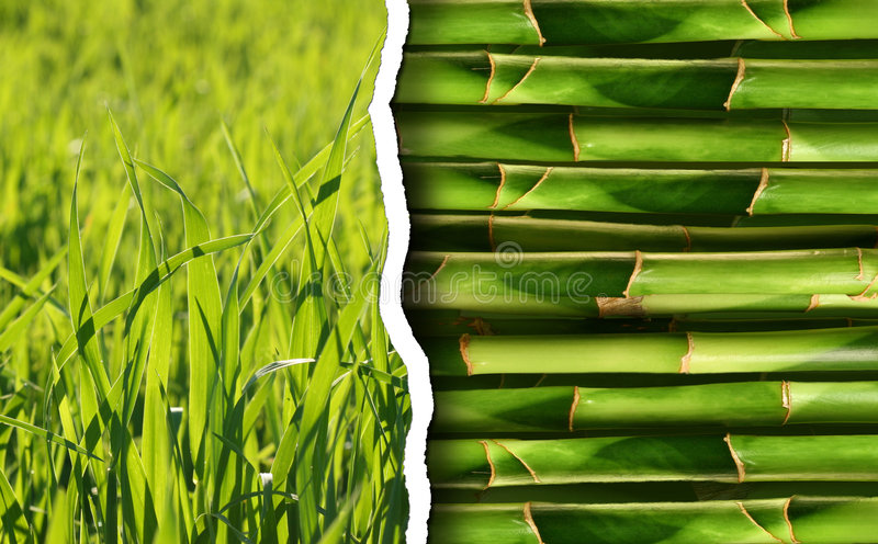 Green Collection Of Nature Background Stock Photography