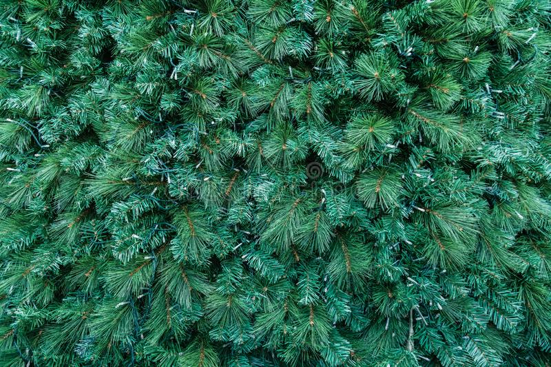Green color Christmas pine tree background detail view stock photo