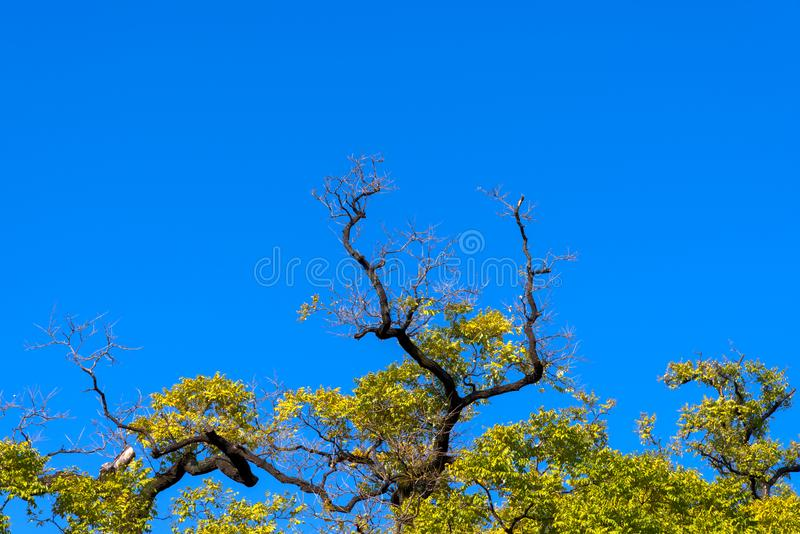 Green color of treetop with blue sky stock image