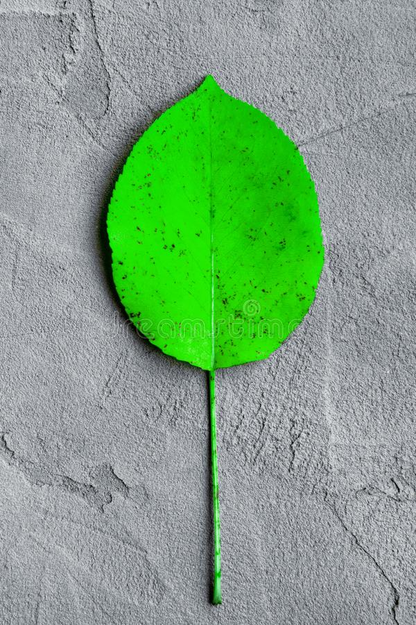Green colored autumn leaf on a gray plaster background royalty free stock photos