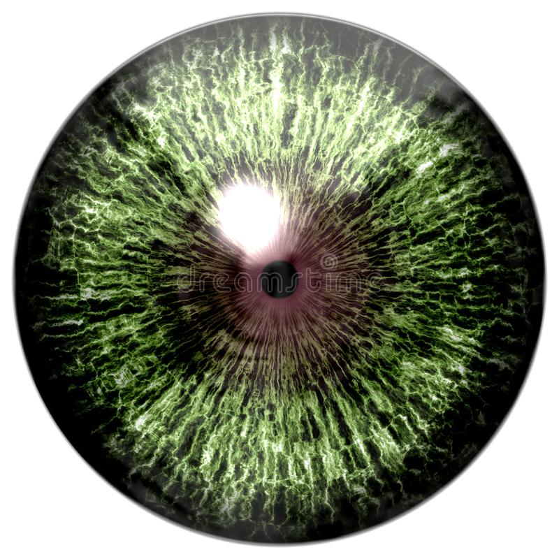 Green colorized eye with brown royalty free stock photo