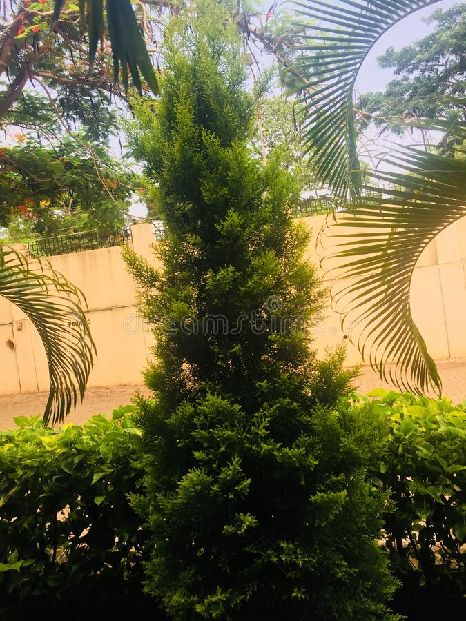 Green colour full tree with plants and sky. Green colour full tree with green plants with other trees and sky in background stock image