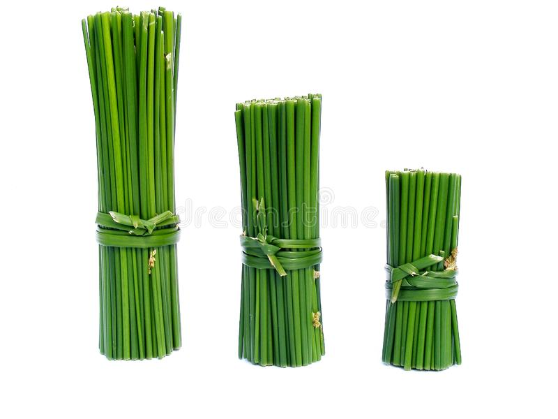 Green Columns Stock Image  Image Of Trend  Diagram  Flora