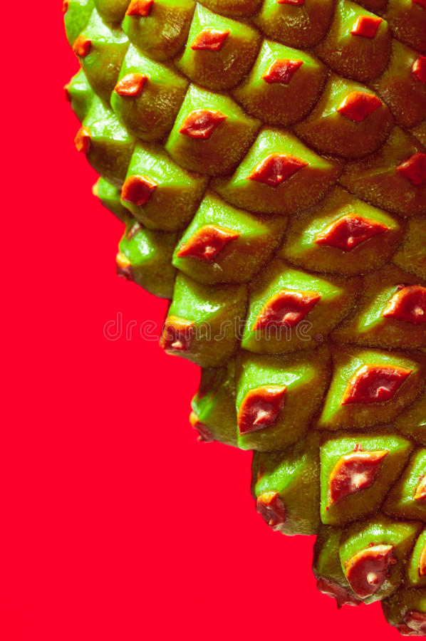 Download Green cone stock photo. Image of natural, forest, color - 23727358