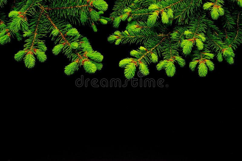 Green conifer branches on a dark background christmas background royalty free stock photos