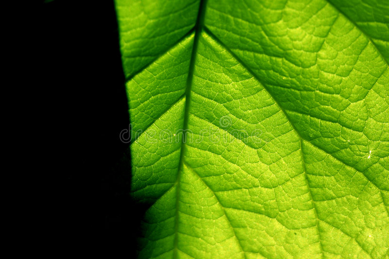 Download Green contrast stock image. Image of circle, fresh, leaves - 3929