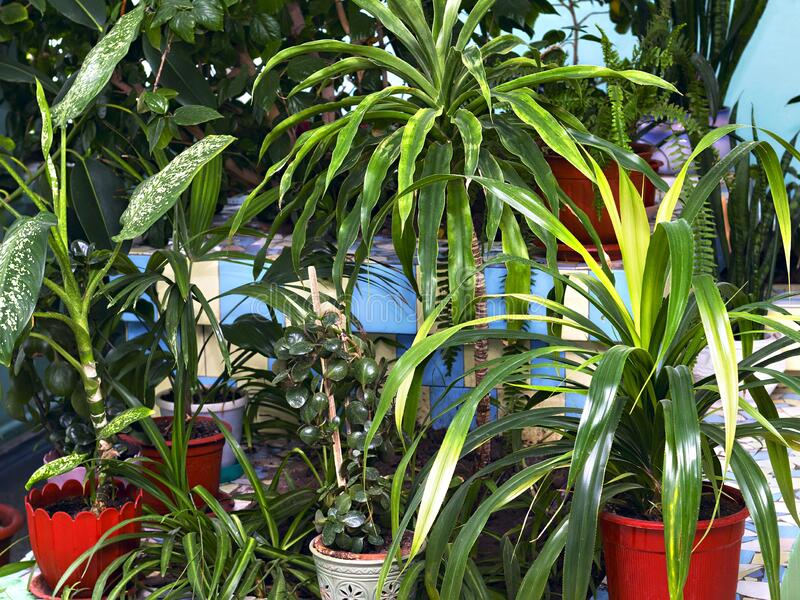 Green corner from various decorative plants in pots stock photos
