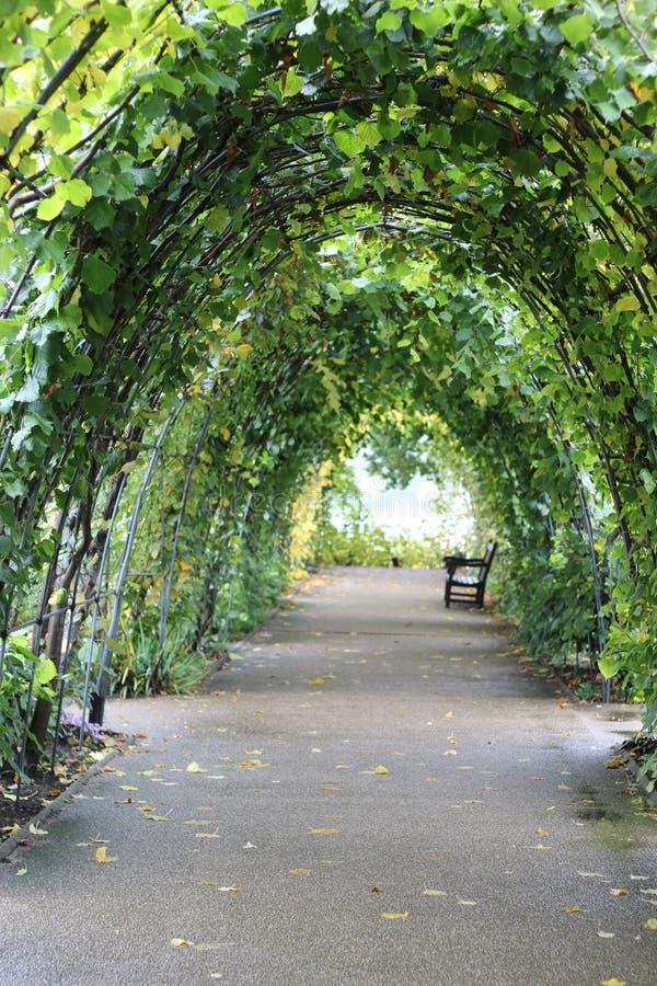 Green corridor_ royalty free stock photo