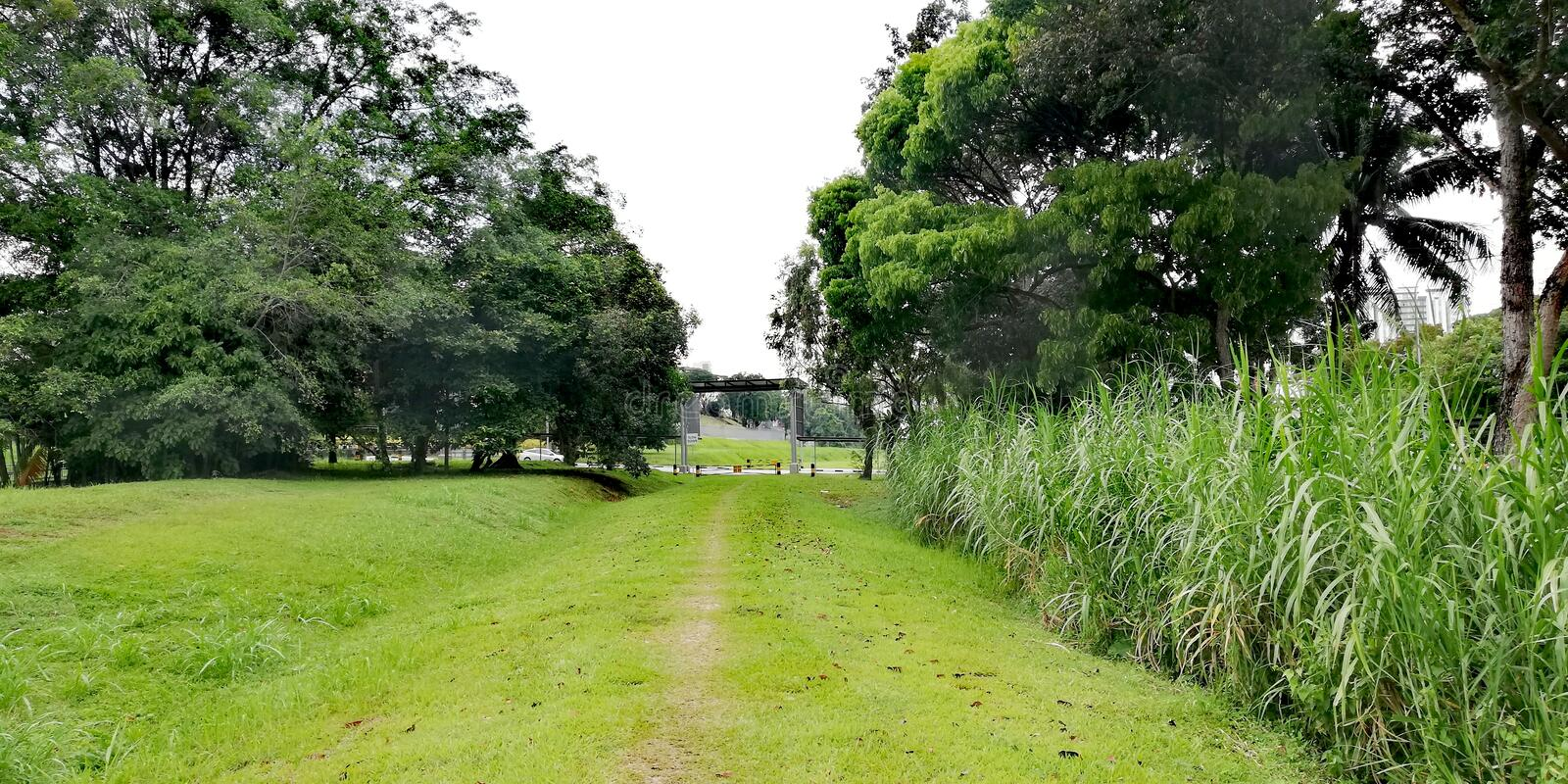 Green corridor at Hillview, Singapore stock photo