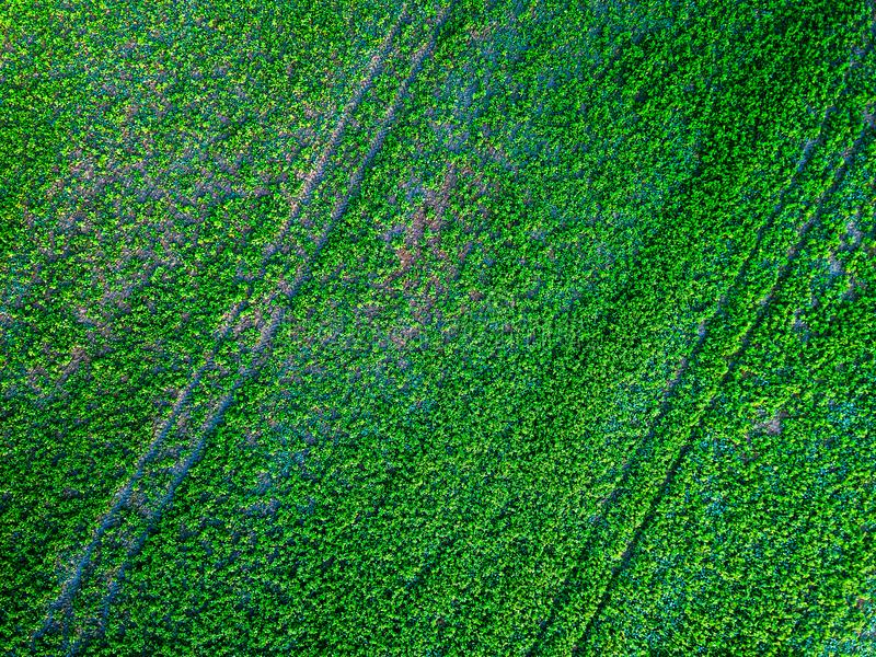 Green country field with row lines, aerial photo stock image