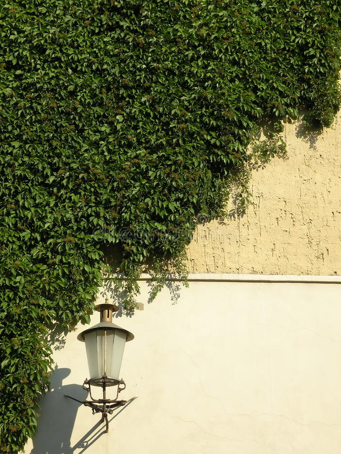 Free Green Creeper And Lamp Stock Images - 15671094